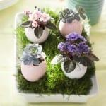 Egg Shell Planters